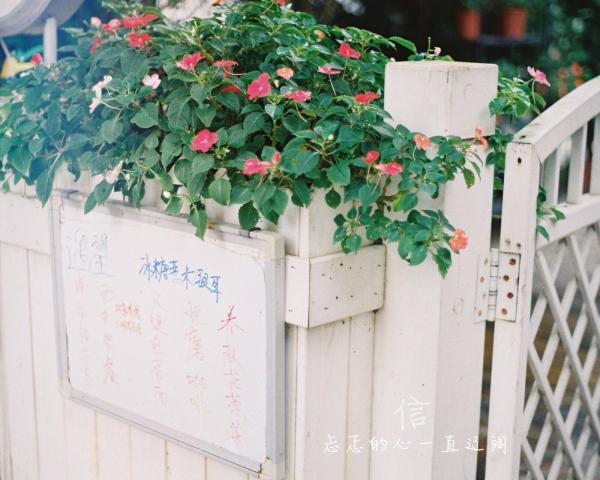 壁纸 花 花束 鲜花 600_480图片